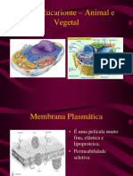Célula Eucarionte – Animal e Vegetal