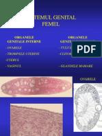 Sistemul Genital Femel