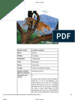 Registro _ Leopardo