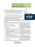 How to get rid of Bermuda Grass
