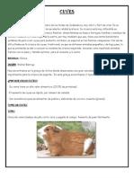 Informe de Cuyes (Zootecnia)