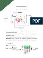 Aula 04 Genetica Bacteriana1