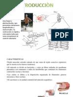 Seminario de Musculo Esqueletico