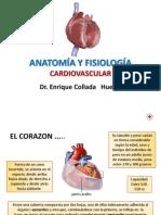 11 Aparato Cardiovascular