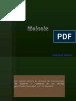 Meiosis embrio[1]-11.pptx