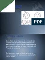 mitosis[1]-12.pptx