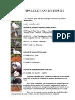 Rase de iepuri(Principalele rase de iepuri).pdf