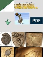 Fósseis.def