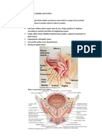 Anatomy of Urinary Bladder and Urethra