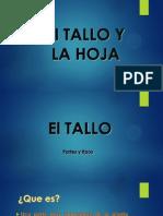 El TALLO Y LA HOJA