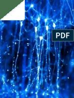 """audit sénat """" Exploration du cerveau Neurosciences"""