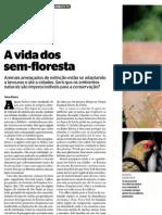 A Vida Dos Sem-floresta