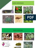 Uso y Abuso de Las Plantas Medicinales