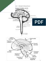 Mandiri Pbl Ske 1 Neuro 2010 - Meningtis & Kejang Demam