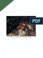 Aichinger. 1991. A new species of poison-dart frog (Anura Dendrobatidae) from the Serranía de Sira, Peru