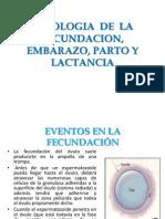 Fisiologia de La Fecundacion, Embarazo, Parto