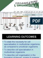 2.1 Cell Organisation