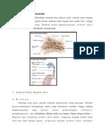 Anatomi   Histologi