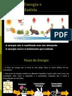 Fluxo energia_ciclo matéria Pirâmides Ecológias e Ciclo da Água