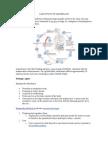 Amoebiasis Case Study