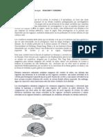 La dislexia.doc