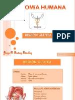 Clase de región glútea.
