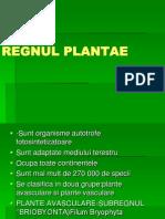 Regnul Plantae