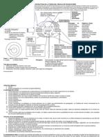 esquema-o-estructura-de-la-teoria-del-vinculo-de-pichon-riviere.pdf