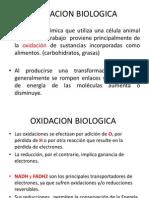 OXIDACION BIOLOGICA
