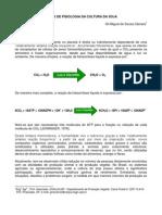 BASES DE FISIOLOGIA DA CULTURA DA SOJA Gil Miguel de Souza Câmara