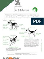 Caninebody Language