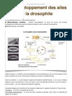TD Développement des ailes de drosophile