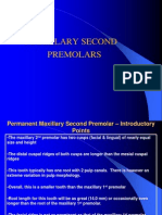 Maxillary Second Premolars