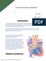 pig heart dissection lab 2012-2013 fist  unicorn
