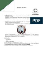 Cerebro Interno