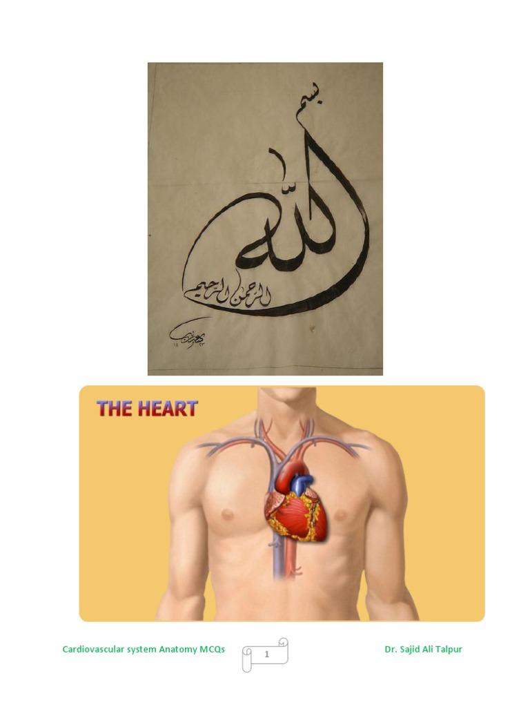 Cardiovascular system anatomy mcqs | Atrium (Heart) | Heart