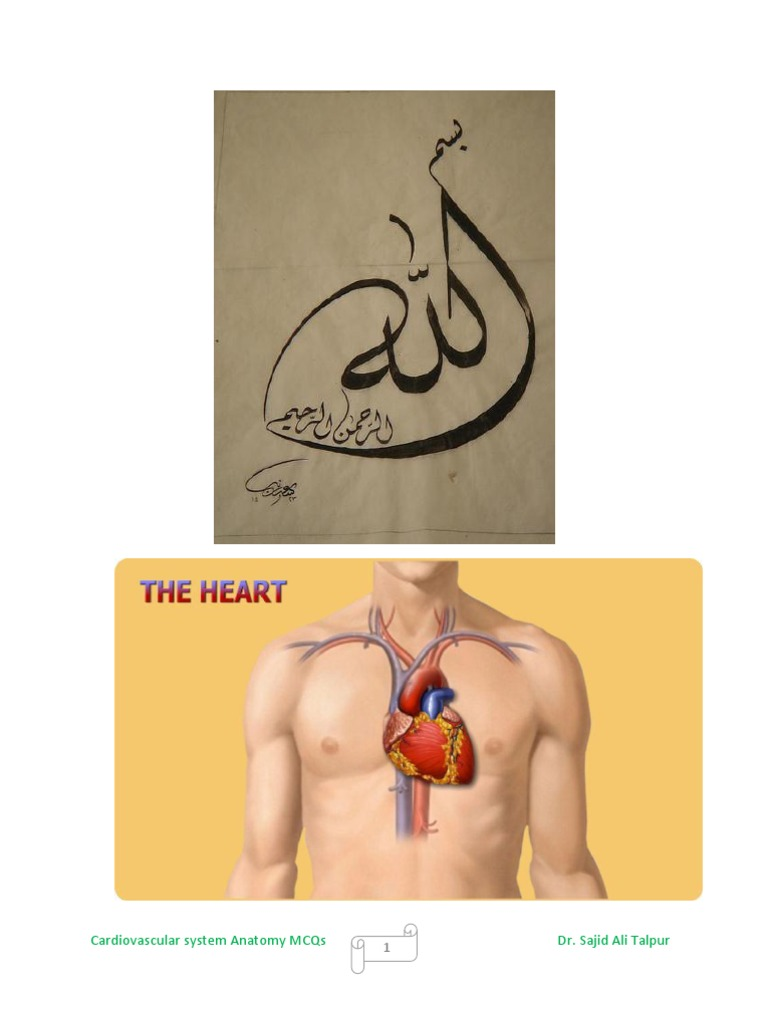 Cardiovascular System Anatomy Mcqs Atrium Heart Heart