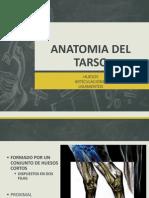 Anatomia Del Tarso