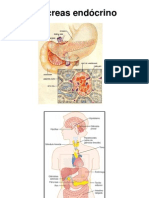 Pâncreas endócrino