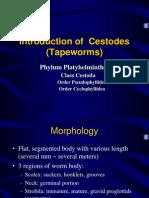 Cestoda Tapeworm