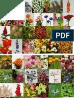 Specii floricole anuale