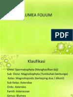 Blumea Folium