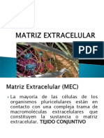 matriz-extracelular.pdf