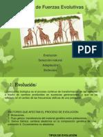 expo Síntesis de Fuerzas Evolutivas.pptx