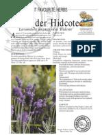 Lavender Hidcote Fragrant
