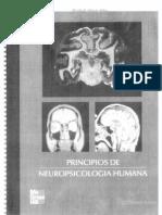 125240496 Principios de Neuropsicologia Humana Rains