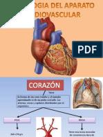 Semiologia Del Aparato Cardiovascular PDF