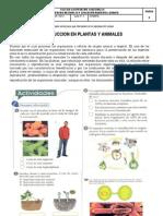 GUIA N.2 Reproduccionen Plantas y Animales