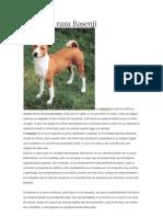 Perros de Raza Basenji