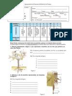 Teste 6 Plantas V2
